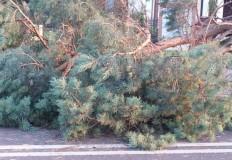 Przegląd drzew na terenie Konina po lipcowych nawałnicach