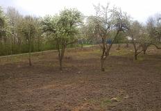 Posadzą około 150 drzew owocowych w miejskim sadzie