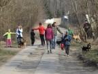 Sto bezdomnych psów wyszło ze schroniska na spacer