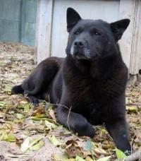 Kalif - niedźwiadek szuka domku. Czy kogoś zauroczy?