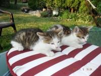 Mam do wydania małe kotki - za darmo