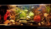 Akwarium 240l. z pełnym wyposażeniem i rybami Pyszczaki