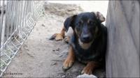Kantus - młody psiak czeka na swoją szansę.