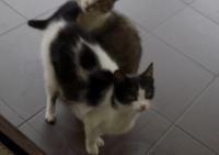 Dwie roczne koteczki szukają dobrych domków