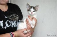 Maleńki kociak czeka na nowy domek