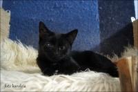 Renia - młodziutka koteczka czeka na dom