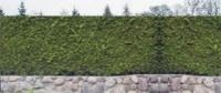 NOWOŚĆ - imitacja ogrodzenia !