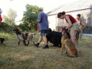 Ośrodek Szkolenia, Hotel i Salon Kosmetyczny dla psów Salon kosmetyczny dla psów