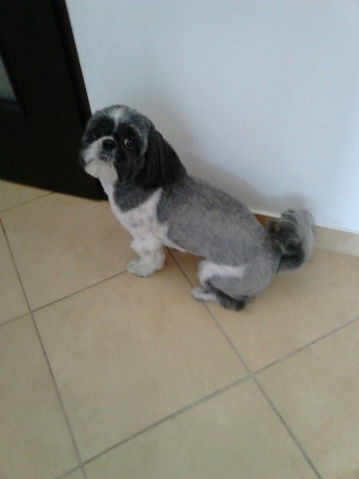 Firma Salon Pielęgnacji Psa I Kota Barbi