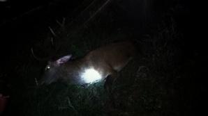 Zderzenie z jeleniem. Kierowca trafił do szpitala
