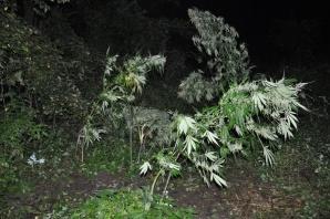 Zlikwidowana plantacja marihuany. Zarzuty dla dwóch 18-latków