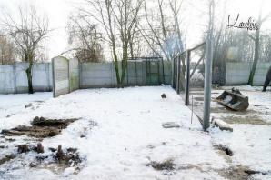 Konińskie schronisko dla bezdomnych zwierząt potrzebuje pomocy
