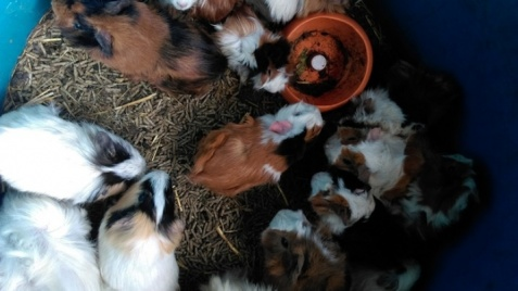 Konin. Potrzebne pieniądze na ratowanie zwierząt z pseudohodowli!