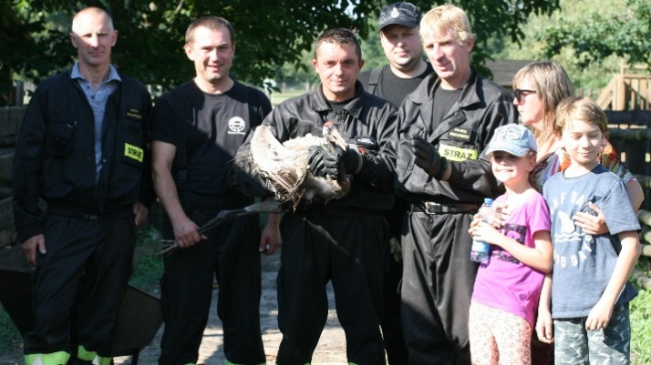 Dzierawy. Strażacy z mieszkańcami uratowali rannego żurawia