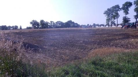 Osiek Mały. Strażacy walczyli z pożarem zboża na pniu i słomy