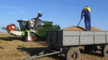 Rolnicy zakończyli żniwa. Trwa szacowanie strat związanych z suszą