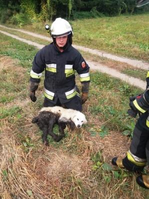 Zagórów. Uratowali psa, który grzązł w bagnie. Podali tlen i okryli