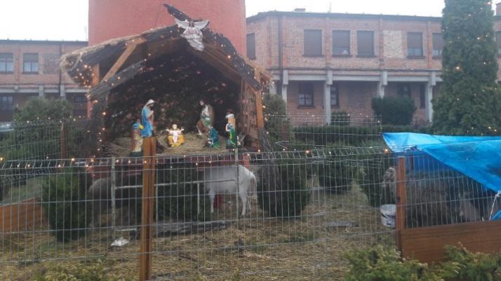 Konin. Tradycyjne żłóbki w kościołach. Przy jednym żywa szopka
