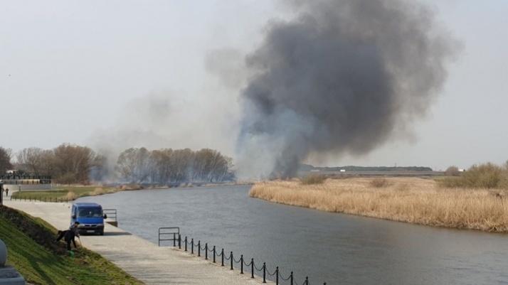 Strażacy walczą z pożarem trawy niedaleko konińskiego bulwaru