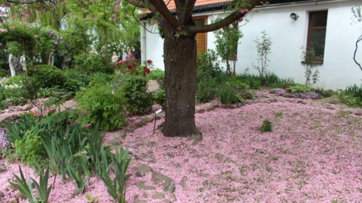 MOK. Hanami, czyli zwyczaj podziwiania urody kwiatów na pikniku