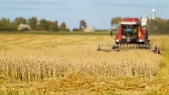 Szacowanie strat przez suszę. Gminy przyjmują wnioski rolników