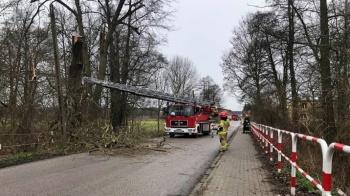 Grodziec. Drzewo stwarzało zagrożenie na drodze powiatowej