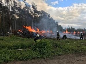 Kazimierz Biskupi/Golina. Walczą z pożarem drzew po wycince