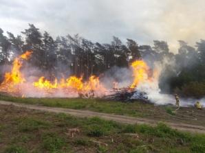 To piętnastolatek odpowiada za pożar w Puszczy Bieniszewskiej