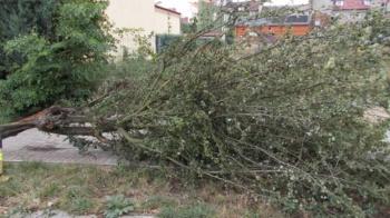 Usuwanie skutków silnego silnego wiatru w powiecie konińskim