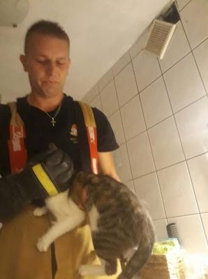 Strażacy uratowali kota uwięzionego w przewodzie wentylacyjnym