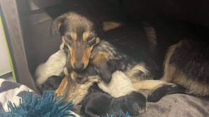 Suczki uratowane z kopalni. Potrzebne pieniądze na psią rodzinę!