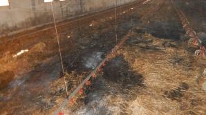 Borysławice Zamkowe. W pożarze kurnika zginęło 7 tysięcy piskląt