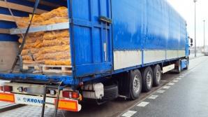 Międzynarodowy transport ziemniaków bez zabezpieczenia