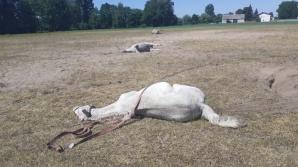 Na pastwisku padło 15 koni. Śledczy czekają na wyniki sekcji