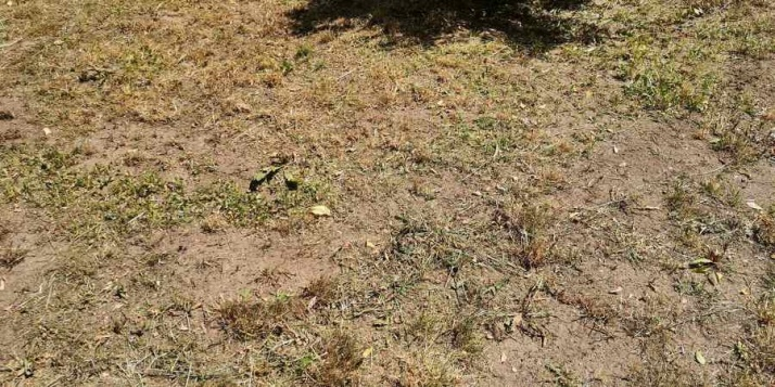 Kosiarki wraz z trawą niszczą życie - motyli, pszczół i... ptaków
