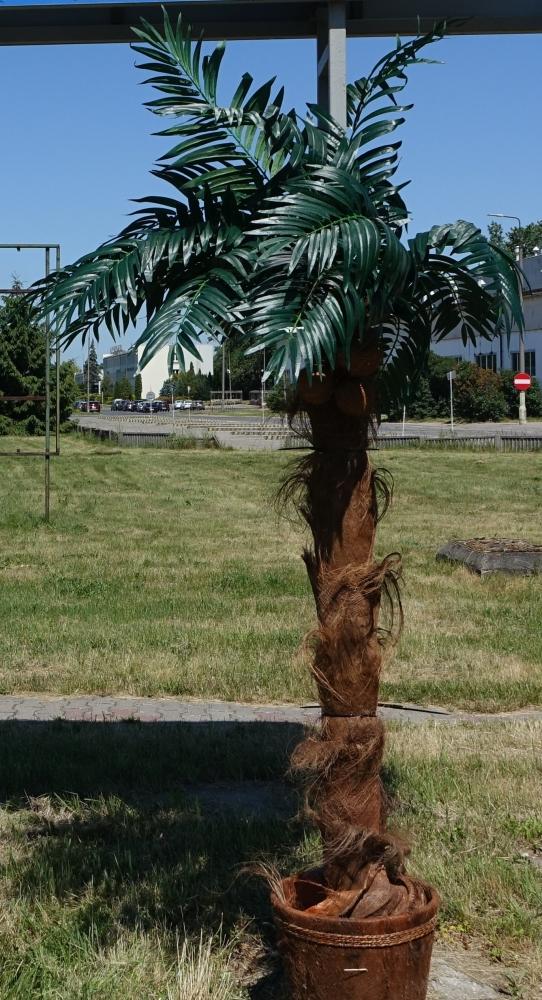 Przy głównej ulicy Kleczewa wyrosła palma! Nowa miejscówka na rozrywkowej mapie regionu