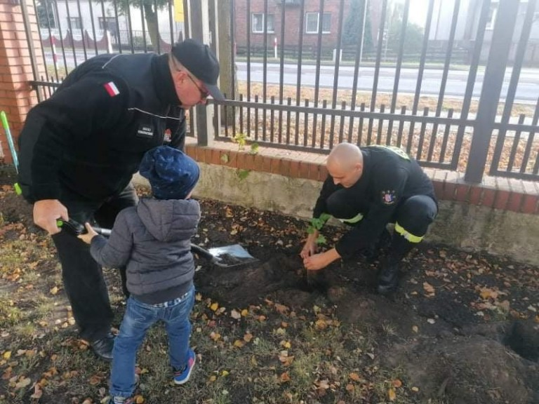Posadzili 100 drzew na 100-lecie Związku Ochotniczych Straży Pożarnych