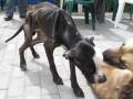 Konin: Głodziła psy
