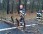 Drzewo spadło na przejeżdżające BMW. Nikomu nic się nie stało