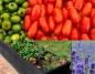 Własny warzywnik w ogrodzie, jak go stworzyć?