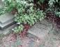 Społecznicy ratują zabytki. Sprzątają stary ewangelicki cmentarz