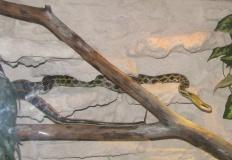 Happy End. Trzymetrowy wąż wrócił do domowego terrarium