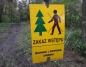 Konin. Wycinka drzew w okresie lęgowym? Mieszkańcy alarmują