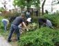 Amerykańscy żołnierze sprzątali ogród przy hospicjum