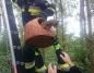 Anastazewo. Strażacy uratowali kota. Ściągnęli go z drzewa