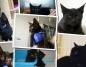 Czarne koty do adopcji. W piątek 13-tego mogą przynieść szczęście