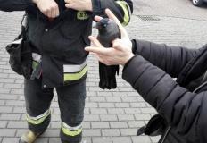 Ptak w studzience. Na pomoc ruszyli konińscy strażacy i TOZ