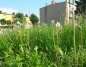 Wysoka trawa w Łężynie. Mieszkańcy czekają na jej skoszenie