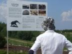 Kleczew. Czarny szlak słonia leśnego został oficjalnie otwarty!