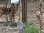 Konin.Schronisko dla zwierząt apeluje - czworonogi Was potrzebują